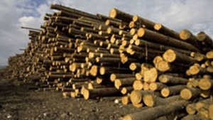 NSP boiler consumed 50 truckloads of wood biomass a day in 2014 2